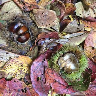 果物の隣に座っているぬいぐるみのグループの写真・画像素材[2514965]