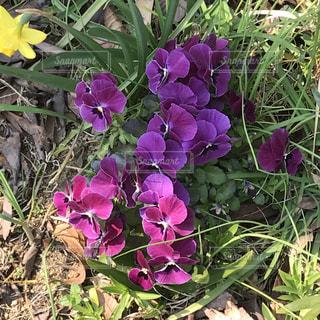 花の写真・画像素材[390462]
