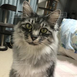 猫の写真・画像素材[390547]