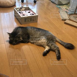 猫 - No.390615