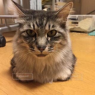 猫の写真・画像素材[390693]