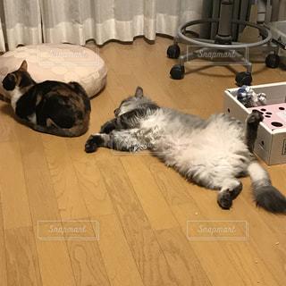 猫の写真・画像素材[390786]