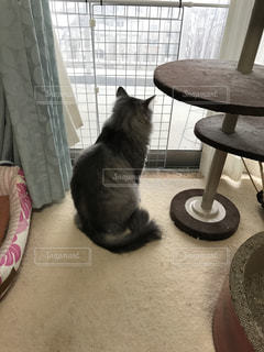 猫の写真・画像素材[391493]