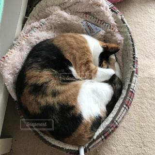 猫の写真・画像素材[391932]