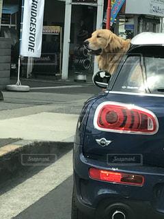 犬 - No.409494