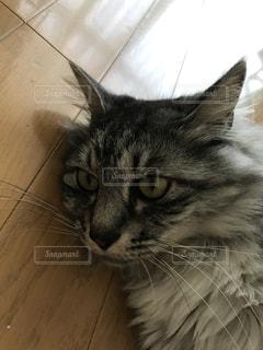 猫 - No.412652