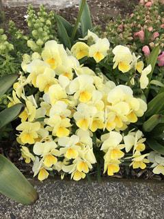 花の写真・画像素材[421450]
