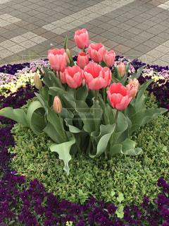 花の写真・画像素材[421456]