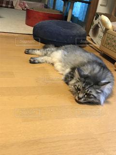 猫 - No.428465