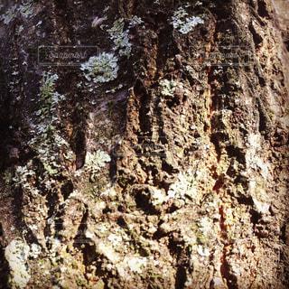 森林の写真・画像素材[401327]