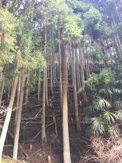 森林の写真・画像素材[409624]
