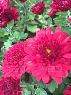 花 - No.538712