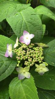 花の写真・画像素材[548176]