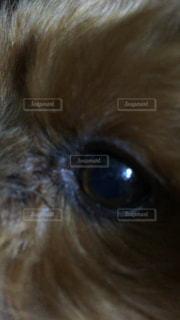 犬の写真・画像素材[548181]