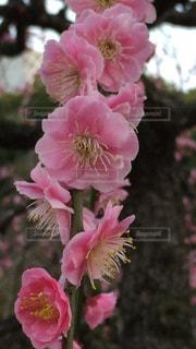 花の写真・画像素材[548204]