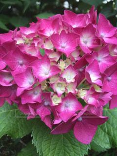 花の写真・画像素材[558242]
