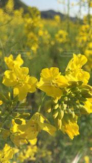 花の写真・画像素材[580530]