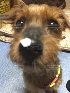 犬 - No.583106