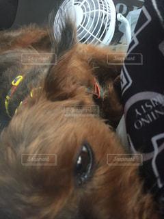 犬の写真・画像素材[592212]