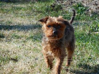 犬の写真・画像素材[593591]