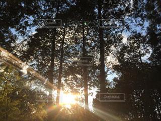 森林 - No.600332