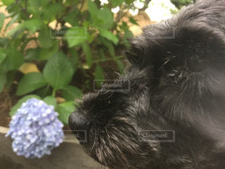 犬 - No.609125
