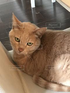 猫の写真・画像素材[484879]