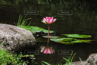 自然の写真・画像素材[394381]