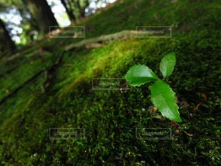自然の写真・画像素材[396348]