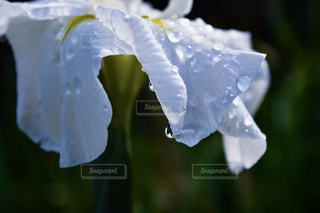 花の写真・画像素材[519291]