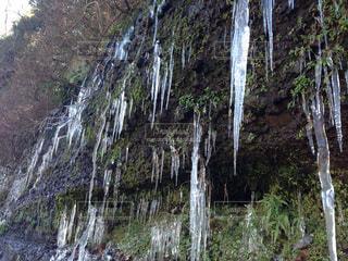 冬の写真・画像素材[410003]