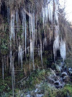 冬の写真・画像素材[410004]