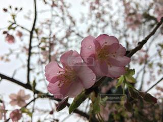 春 - No.392254