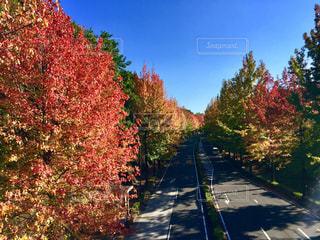 秋の写真・画像素材[393870]