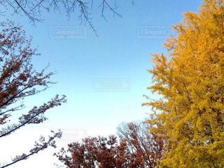 自然の写真・画像素材[396302]