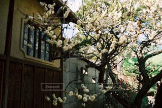 京都の写真・画像素材[393627]