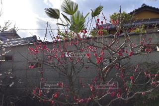 花の写真・画像素材[393636]
