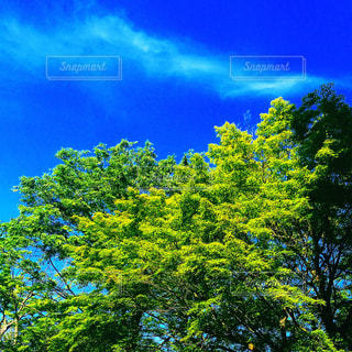 自然の写真・画像素材[393286]
