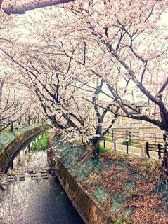 春の写真・画像素材[422867]