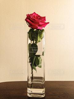 花の写真・画像素材[393784]