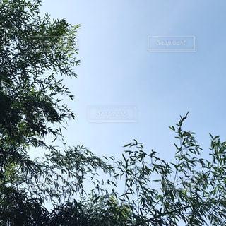 空の写真・画像素材[542696]