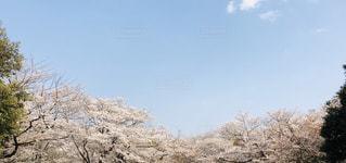木のクローズアップの写真・画像素材[2415970]