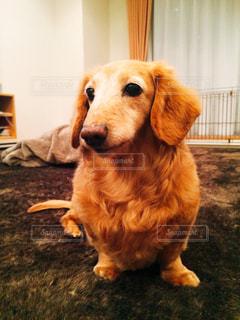 犬の写真・画像素材[393772]