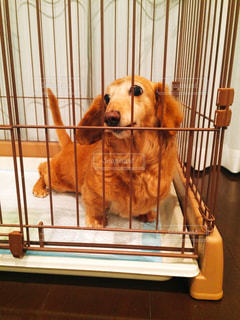 No.393773 犬