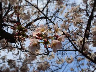 春の写真・画像素材[394840]