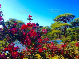 花の写真・画像素材[405662]
