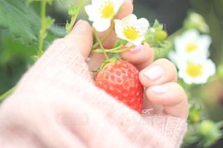 花の写真・画像素材[394247]