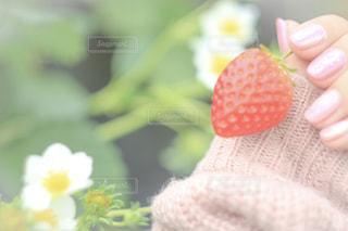 花の写真・画像素材[394249]