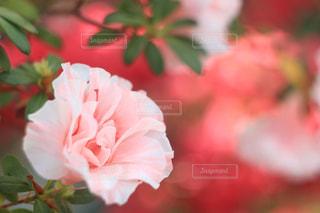 花の写真・画像素材[394937]