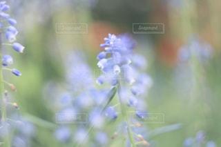 花の写真・画像素材[394938]